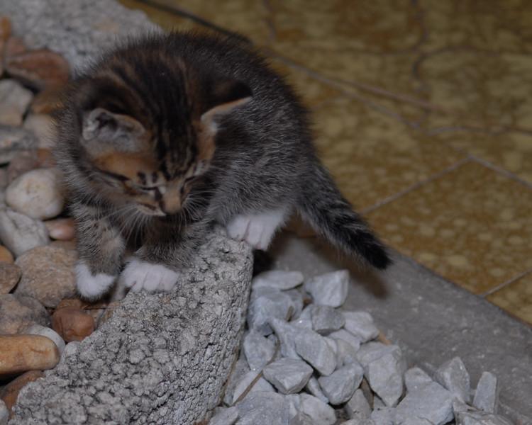 2007 04 12 - New Kitty 023.JPG