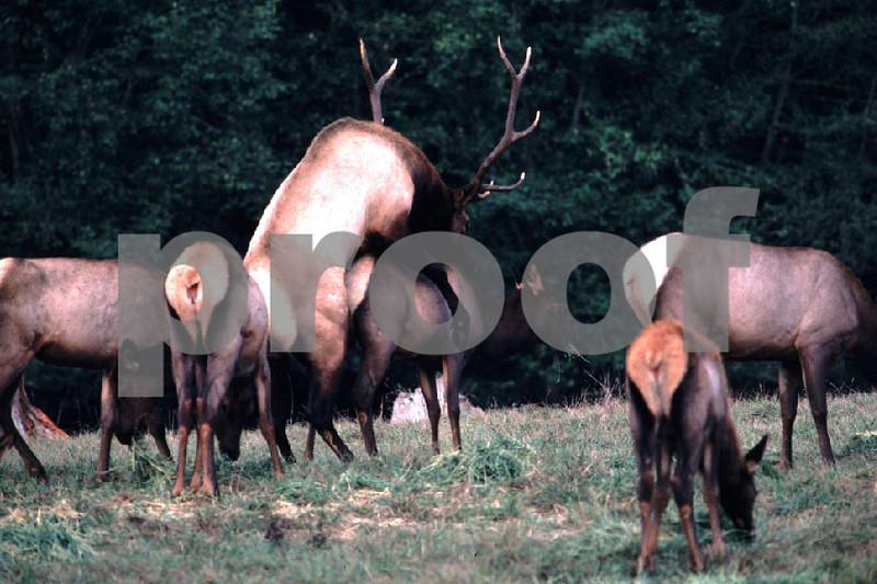 Elk mate.jpg