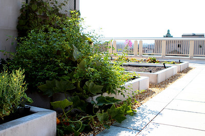 MacDonough Gardens / CHC Rooftop 9/14/12