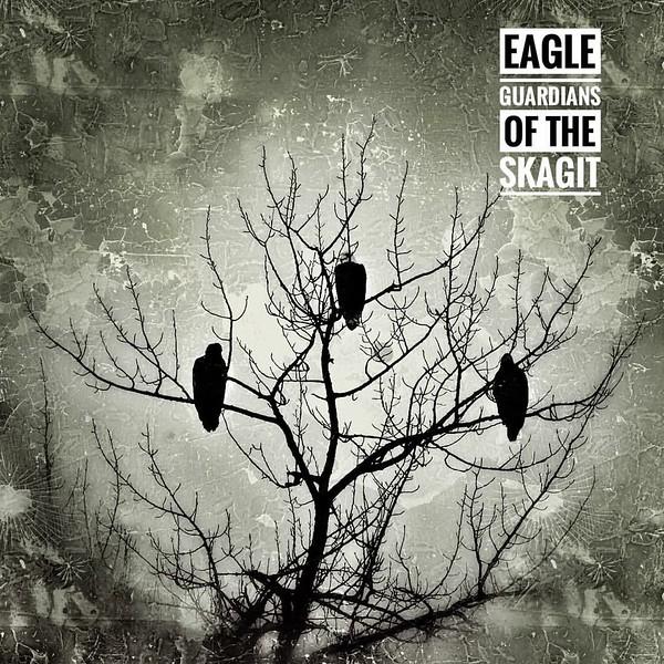 170118-Eagles of Skagit-1.JPG
