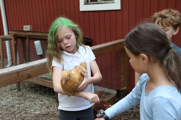 Shoofly Farm