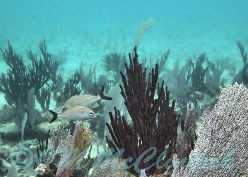 Reef at the Barcelo Maya Palace.