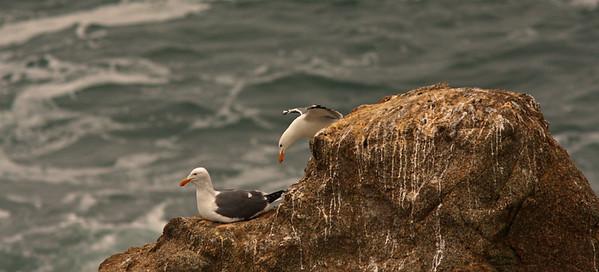 Bodega Bay May 2012