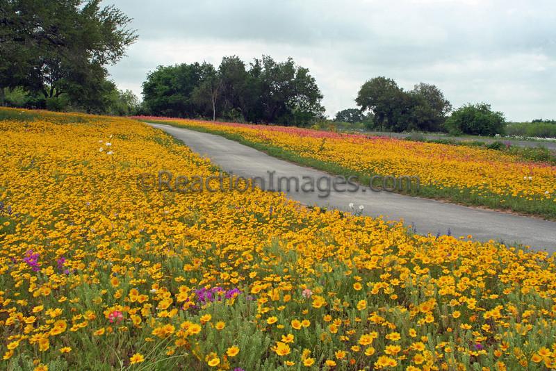Texas spring_2008.jpg