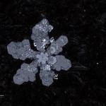 snowflakes-1385.jpg