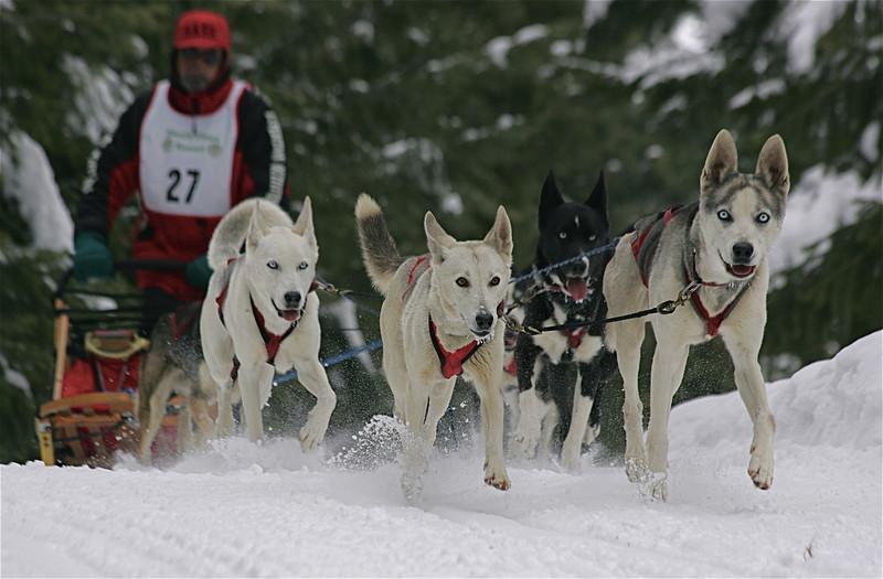 Conconully Dogsled Race Jan 2008 Card 2 083.jpg