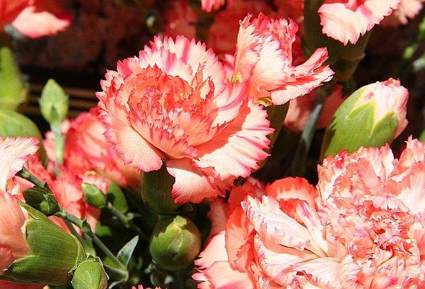 arlinaflower.jpg
