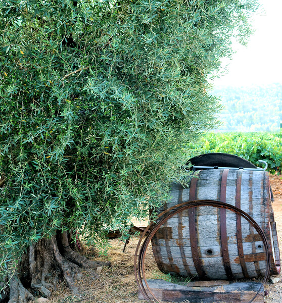 08_19 toulon piracci barrel and stave DSC04424.JPG