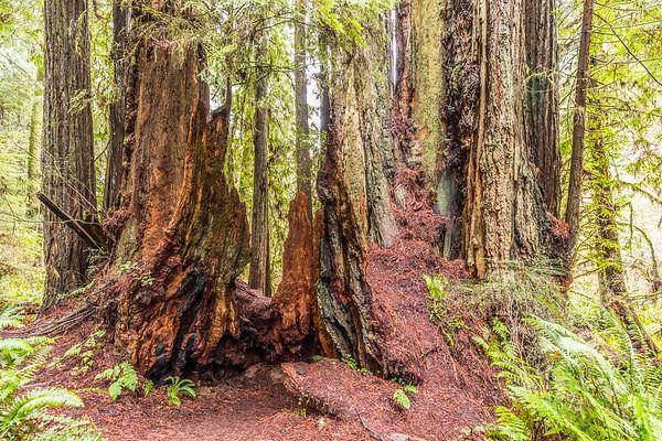 Redwood Coast (2017-12)