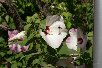 0.3 Flora and Fauna