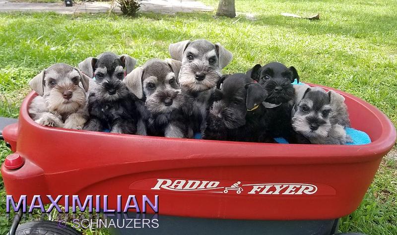 Paloma Pups 051.jpg