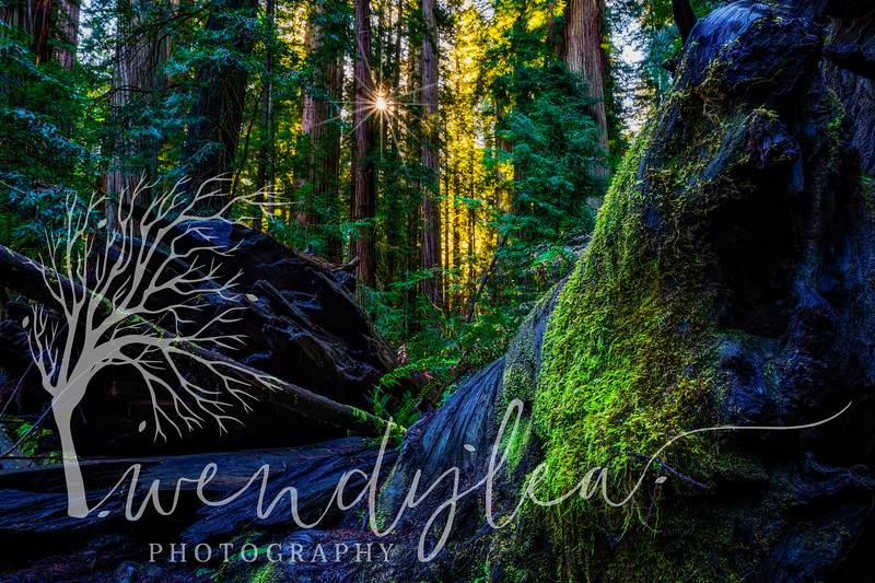 wlc Oregon Coast 032019 5352019-Edit-Edit.jpg