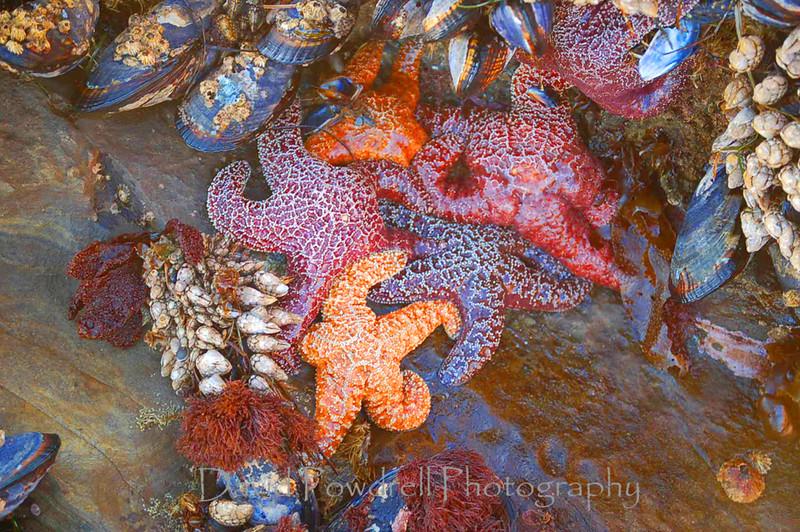 Jim's starfish.jpg