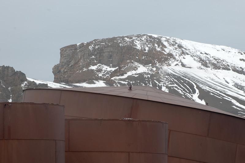 Antarctica 2015 (84 of 99).jpg
