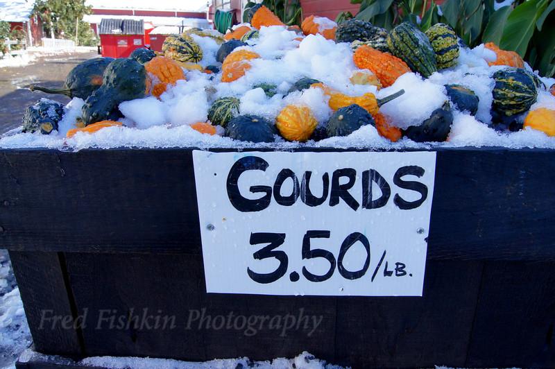 Terhune gourds.jpg