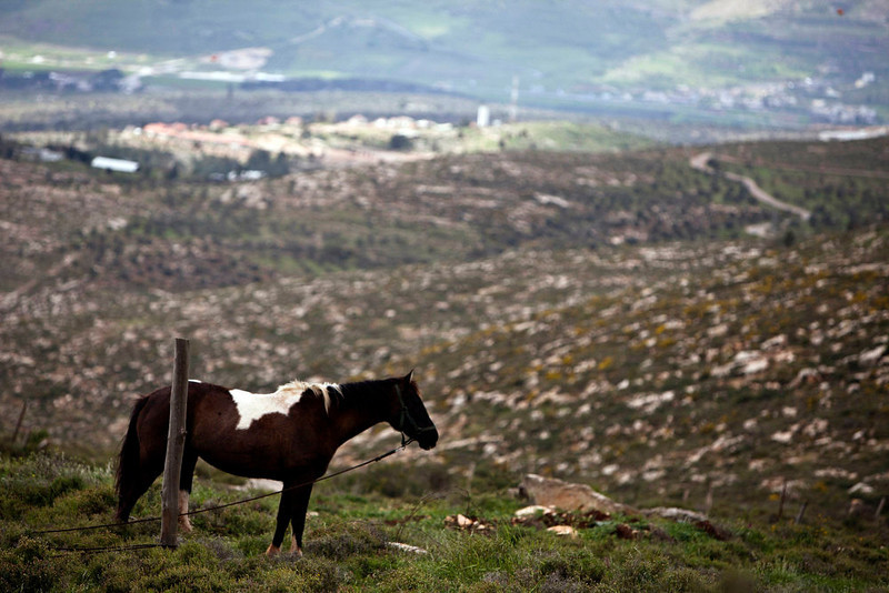. A horse stands on a hill next to the West Bank settlement of Itamar, near Nablus on March 17, 2013. U.S. President Barack Obama is due to make his first official visit to Israel and the Palestinian Territories this week, looking to improve ties after sometimes rocky relations with both sides during his first term in office. Israeli settlement expansion lies at the heart of much of the rancor between Israeli Prime Minister Benjamin Netanyahu and Obama, who has said the U.S. does not accept the legitimacy of continued settlement. Picture taken March 17, 2013. REUTERS/Nir Elias