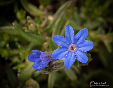 Ballard Flowers-03-10-21