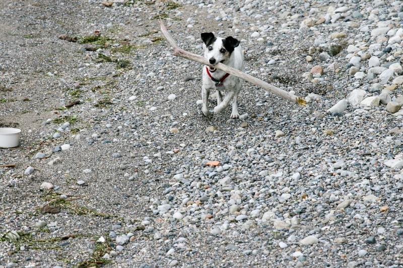 farley pups 034-2 (1).jpg