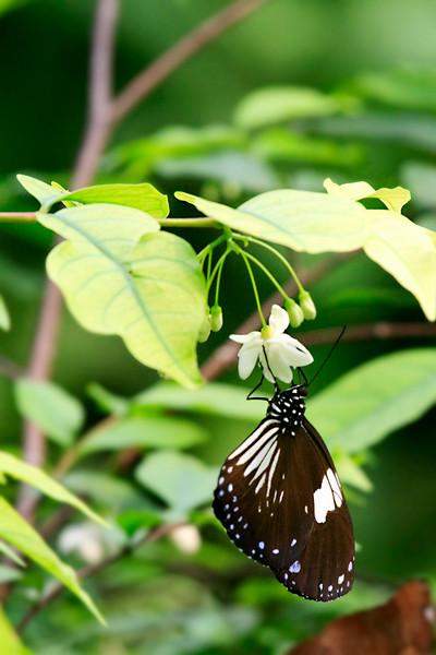 090620 KL Butterfly Park 23