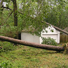 Join the Houston area Share-A-Tree Foundation<br /> Hurricane Ike