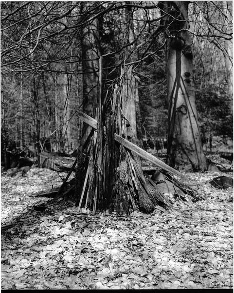 Odenwald010.jpg