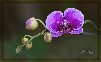 Floral Florida