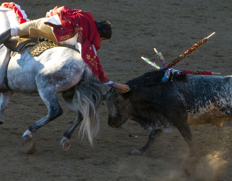 Cavaleiro Luis Rouxinol again touches the head of the running bull as it tries it's best to gore his horse and take them down!