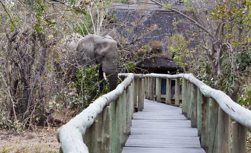 Botswana-20110714-1908.jpg