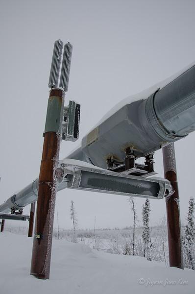 USA-Alaska-arctic-circle-2459.jpg
