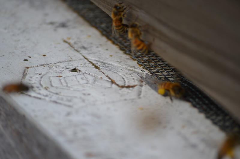 2016-03-12_Bees_001.JPG