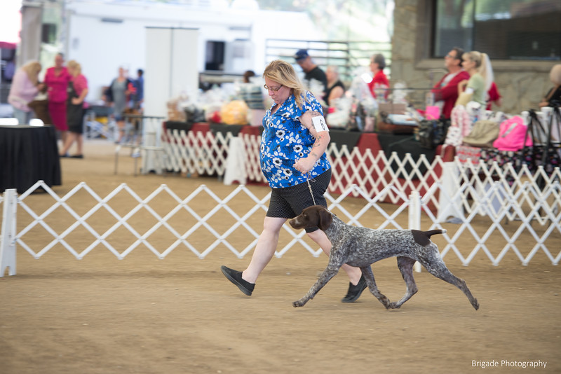 2019 Malibu Kennel Club-9998.jpg