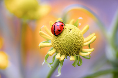 Ladybirds, bugs and bees