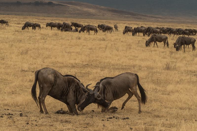 Tanzania_Safari-best-58.jpg