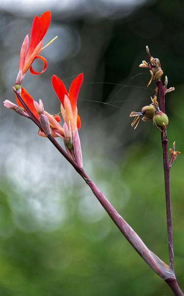 Symbiotic Nature