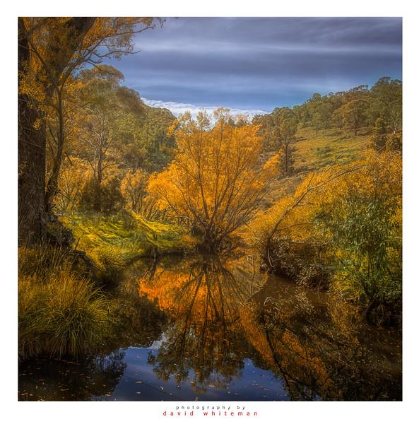 Autumn at the Billabong