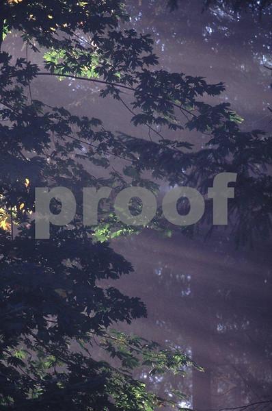 Sun rays forest  3.jpg