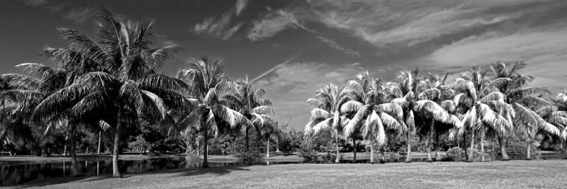 G2 Tropical X (15).jpg
