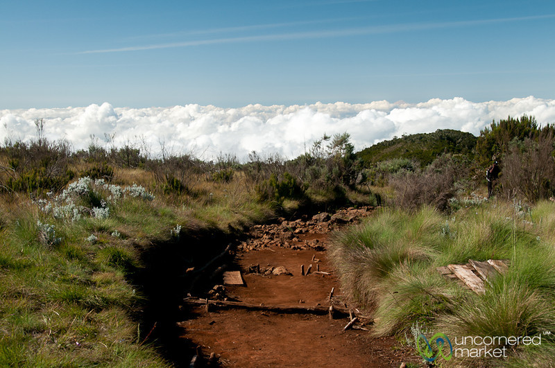 Hiking Above Clouds - Mt. Kilimanjaro, Tanzania