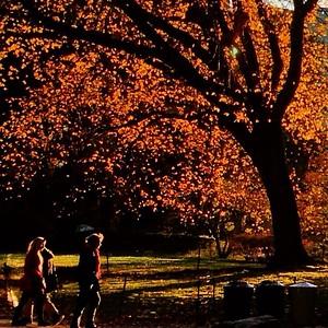 Central Park Landscapes