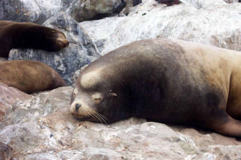 cute harbor seals.jpg