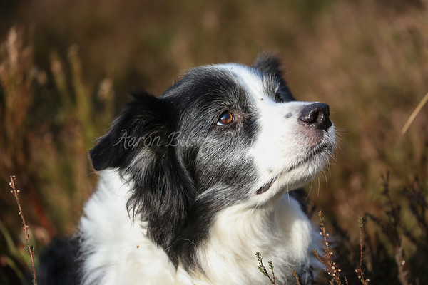 Waggy Tails Dog Walking 31st Jan and 1st Feb