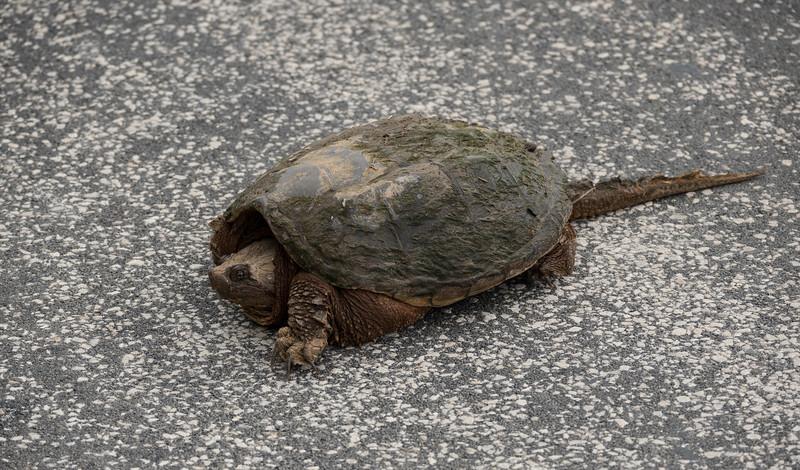 05-21-2020-turtle-2.jpg