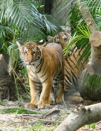 palm beach zoo nov 26