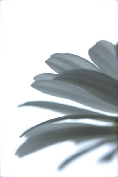 705067291_snwshflowers_53-852129596-O.jpg