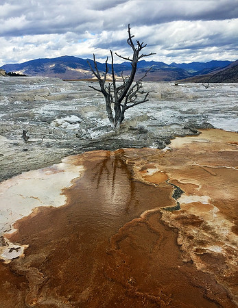 Yellowstone - Mammoth Hot Springs