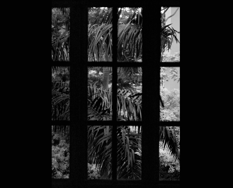 window b&w copy.jpg
