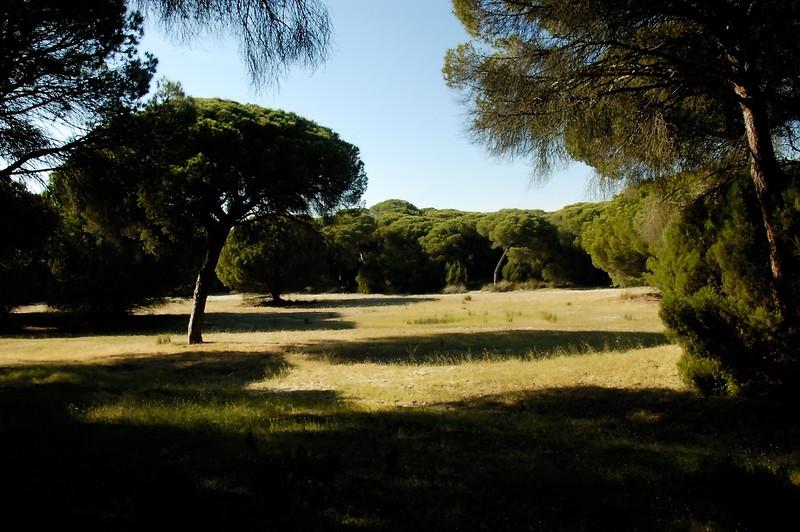 031Jerez Seville Sanlucar.jpg
