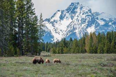 Teton Yellowstone May 2018