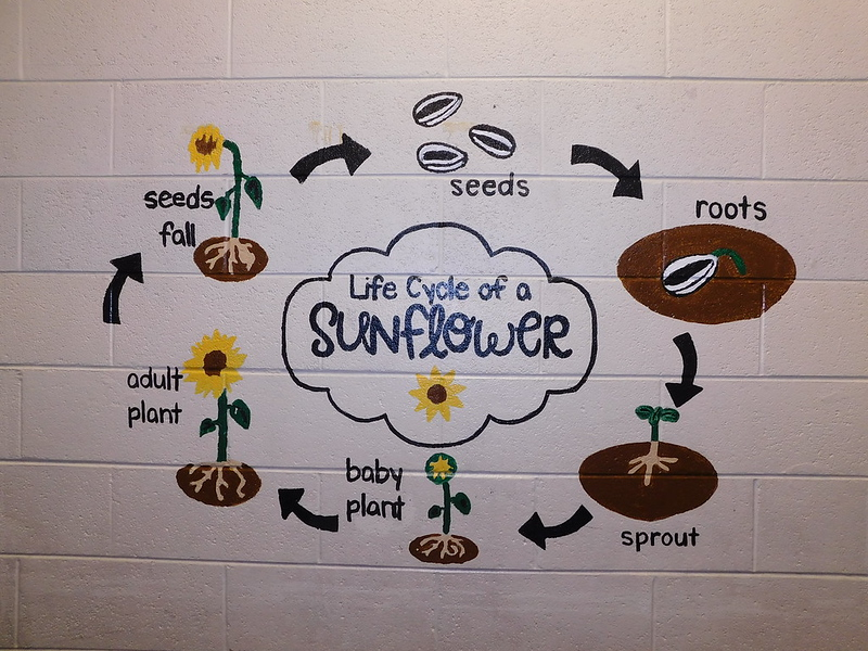 (I7) Sunflower Cycle