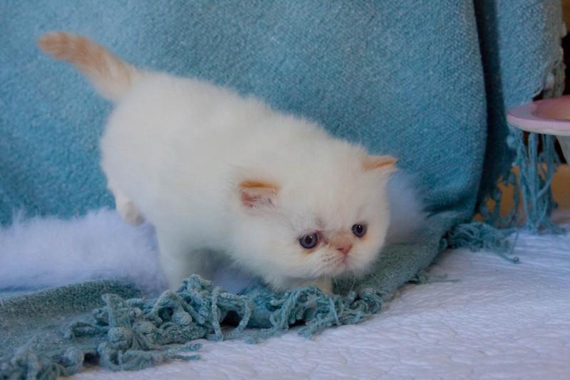 Himi_Kittens_Nov30-8056.jpg